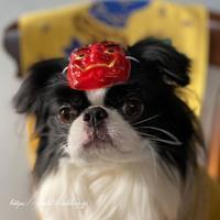 鬼ヘア☆豆好き犬 - 狆の茶々丸
