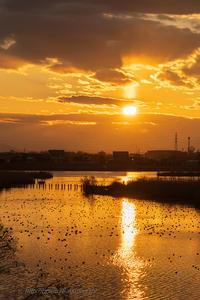 染まる福島潟 - デジタルで見ていた風景