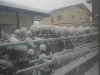 盛岡、今季最高の雪降り - 日頃の思いと生理学・病理学的考察