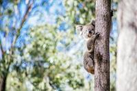 オーストラリア森林火災チャリティパーティ開催とお誘い - ハッピー・トラベルデイズ