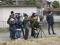 【第11回霞ヶ浦自然観察会「霞ケ浦に来る冬鳥オオヒシクイを探そう」を実施しました!】 - ぴゅあちゃんの部屋