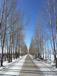 2020年春節近所散策⑤ - Futatsuboshi-blog