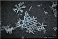 雪は天から送られた手紙 - 北海道photo一撮り旅