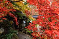 紅葉が彩る京都2019色とりどりの秋(十輪寺) - 花景色-K.W.C. PhotoBlog