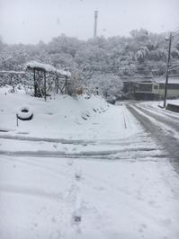 この冬初めての積雪です - とりどり日記     I love my life.
