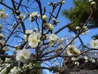 Osaka-4 From Mozu Hachiman to Otori Taisha 大阪の道・百舌鳥八幡神社~大鳥大社へ - 熊野古道 歩きませんか? / Let's walk Kumano Kodo
