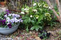 お庭の手入れ - mille fleur の花とおやつ