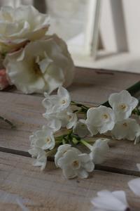 白い花 - mille fleur の花とおやつ