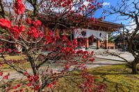 早咲きの梅咲く智積院 - 花景色-K.W.C. PhotoBlog