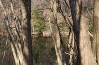 冬の公園にて ~水辺~ (2020/2/3 撮影) - toshiさんのお気楽ブログ