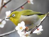 『木曽川水園で鳥探し~』 - 自然風の自然風だより