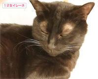 交通事故に遭った猫 - ちいさなチカラ