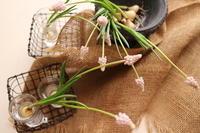 春の足音✨桜色のムスカリが咲いた🌱 - Bouquets_ryoko