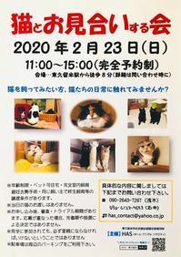 東久留米で猫のお見合い会開催(2020年2月) - きよせ猫耳の会(旧 飼い主のいない猫を考える会)