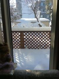 またまた   雪降りました☃️ - ハンドメイド  Atelier   maki