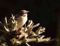前を向いて - ゆるゆる野鳥観察日記