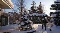 昨日の雪と今日の雪 - 今から・花