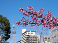木場公園 大横川で早咲きのさくらを - いや、だから 姉ちゃん じゃなくて ネイチャー・・・ その2