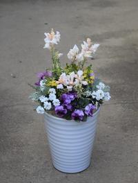白い鉢に春を植える - ヒバリのつぶやき
