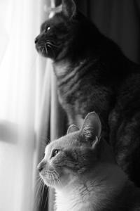邪魔してごめんね - ぎんネコ☆はうす