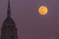 Snow Moon 2020 - Triangle NY