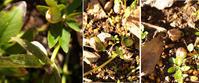 光りの季節 - hibariの巣
