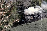 今年初の大井川鐵道追っ掛け1日目 - きょうはなに撮ろう