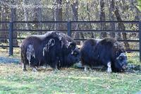 2019年10月ノボシビルスク動物園その41 - ハープの徒然草