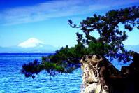 令和2年2月の富士(2)葉山森戸神社からの富士 - 富士への散歩道 ~撮影記~