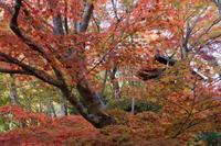 紅葉が遅れていた - katsuのヘタッピ風景