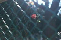 近所散歩 - IN MY LIFE Photograph