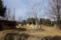 2020/01/31 八木山動物公園 スマトラトラの赤ちゃん公開 - 墨色の鳥籠