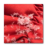 空からの手紙 - 雪割草 - Primula modesta -