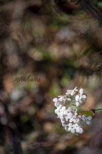 みるはな写真くらぶ3月お題は「息吹」 - MIRU'S PHOTO