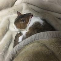 チコにお昼寝時流して良いと許可をもらった曲シリーズ #2 - COMPLEX CAT