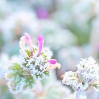 春兆す - 366日の恋するカメラ