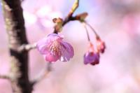可愛いピンク色♪ - happy-cafe*vol.2