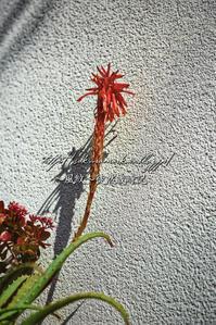 冬日向に咲く。 - ~風紋~徒然歳時記