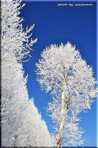 雪の華 - 北海道photo一撮り旅