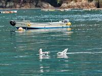 漁港寸景福井県 - ty4834 四季の写真Ⅱ