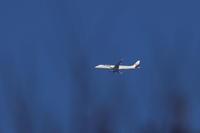 空の色が少し暗かったです。旅客機 - 平凡な日々の中で