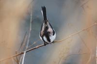 今日の鳥さん200203№2 - 万願寺通信
