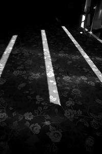 バラのカーペット - 節操のない写真館