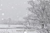 冬の野鳥の森で - C* 日和