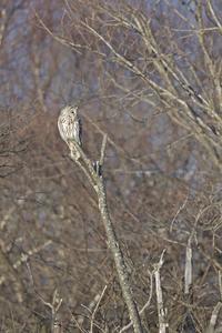 雪のない高原・雪のある高原 - healing-bird
