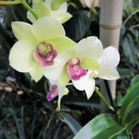 蘭Mille & une Orchidées - tony☆ 3