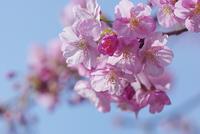 バレンタインデーにチョコをちょこっと!(#^.^#) - 素奈男のお気楽ブログ