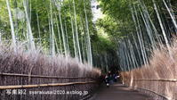嵐山竹の小路 - 写楽彩2