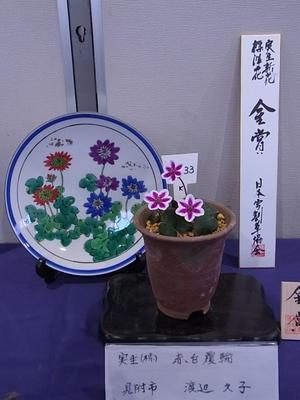 第9回県の花雪割草大会~1~ - harappaの庭別館*ゆきわり草便り*時々バラ