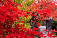 紅葉が彩る京都2019正法寺の紅(くれない) - 花景色-K.W.C. PhotoBlog